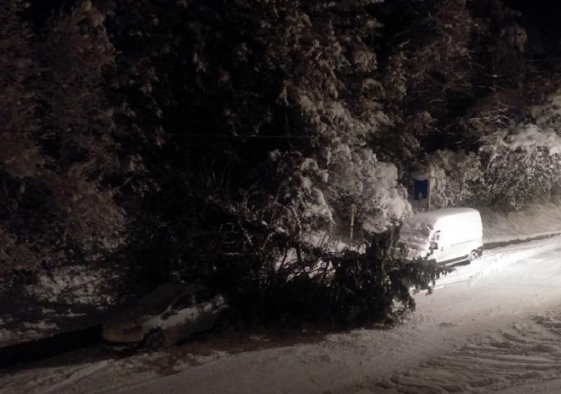 albero cade tra due veicoli, credit foto Simone Puglisi-2