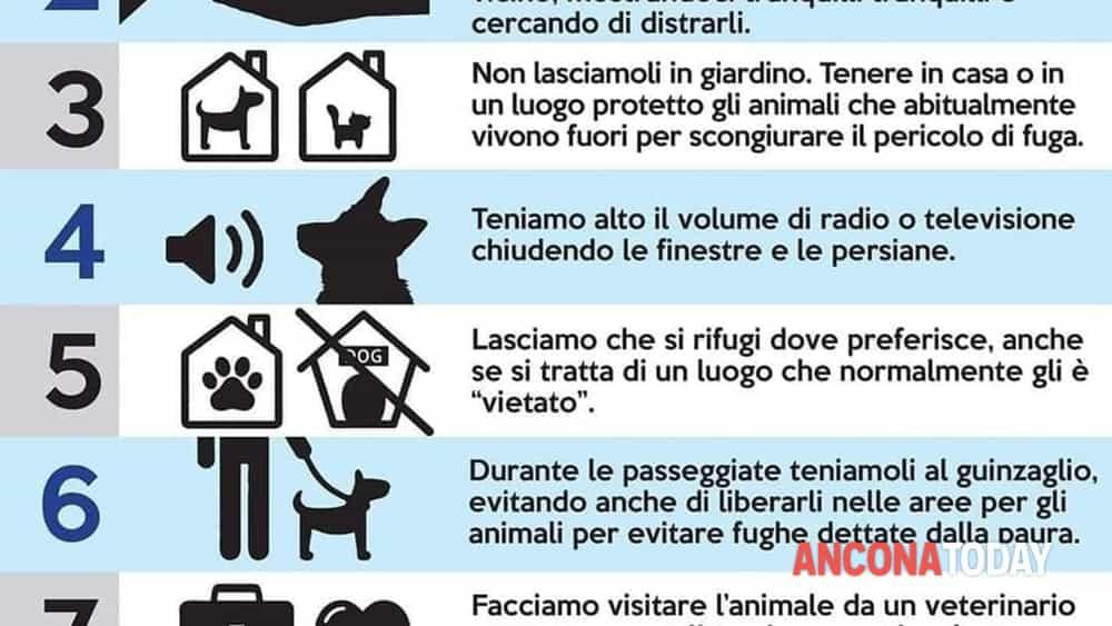 Decalogo oipa per proteggere animali da botti da capodanno-2