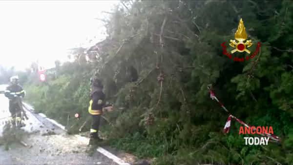 Maltempo, il vento sradica un albero che cade sulla strada | VIDEO