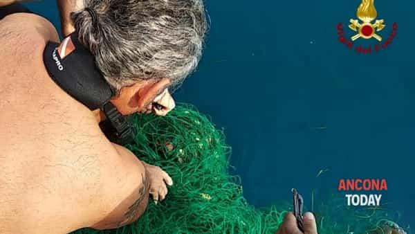 La tartaruga impigliata nella rete torna libera, le operazioni di salvataggio - VIDEO