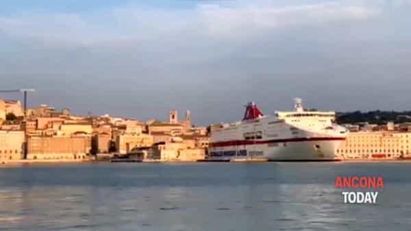 Spettacolo in porto, c'è un delfino che nuota al tramonto - VIDEO