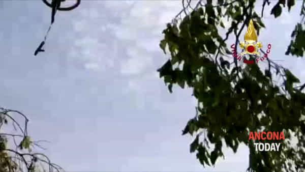 Scappa e precipita nella scarpata, Pepe salvato dai vigili del fuoco - VIDEO