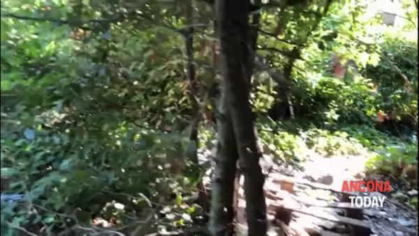 Due pulizie in pochi giorni, ma il parco è di nuovo tempio della droga: ora la bonifica totale – VIDEO