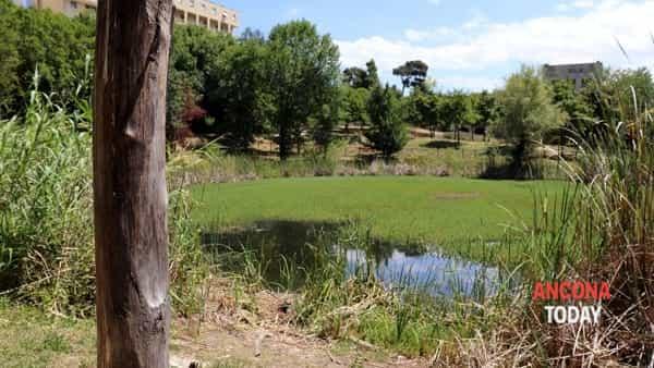 Sembra un prato, ma è un lago senza protezioni: pericolo nel parco | VIDEO