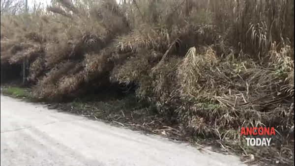 Giungla, discarica e ratti vicino al centro sportivo - VIDEO