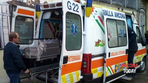 Ambulanza veterinaria