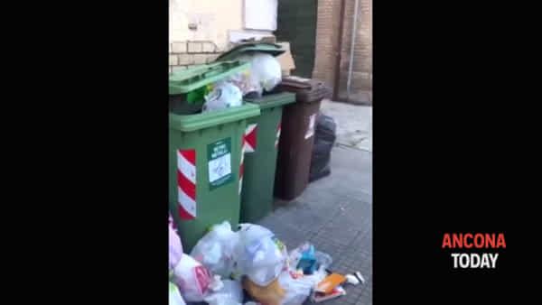 Isolamento tra i rifiuti, spuntano cumuli di spazzatura lungo la via | VIDEO
