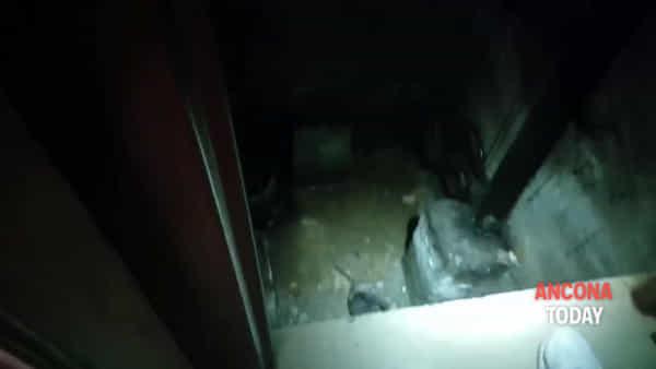 Il gatto rischia di morire nella fossa dell'ascensore, il salvataggio è spettacolare – VIDEO