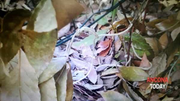 Il cappio trovato dai forestali-2