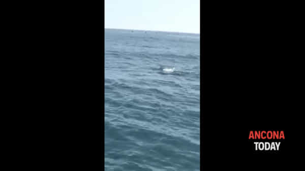 La danza di 50 delfini accompagna la barca - GUARDA IL VIDEO
